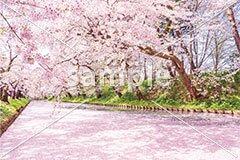 [4月] 満開の桜