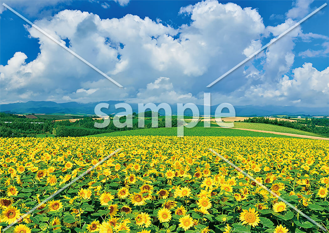 四季の風景