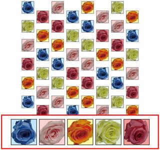 バラ 5種(四角型)