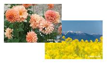 四季の花の写真