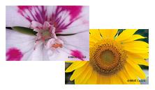 花の秘密の写真